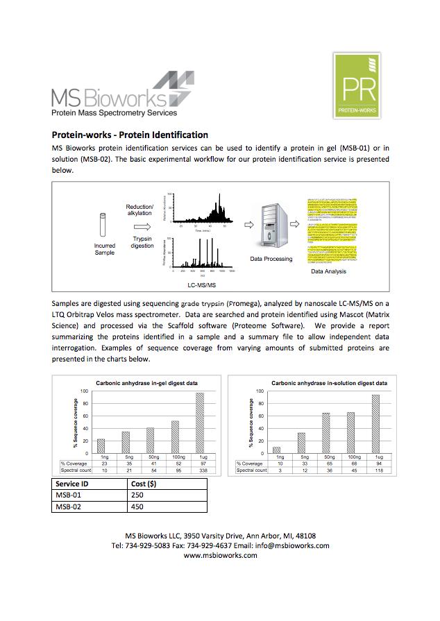 Protein Identification thumbnail